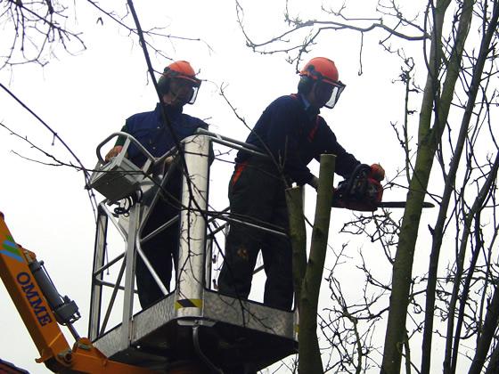 Kappen Bomen Oldenzaal